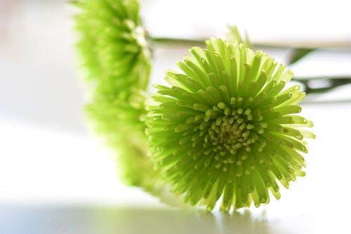 çiçek, Çiçekler, doğa, makro içeren Ücretsiz stok fotoğraf