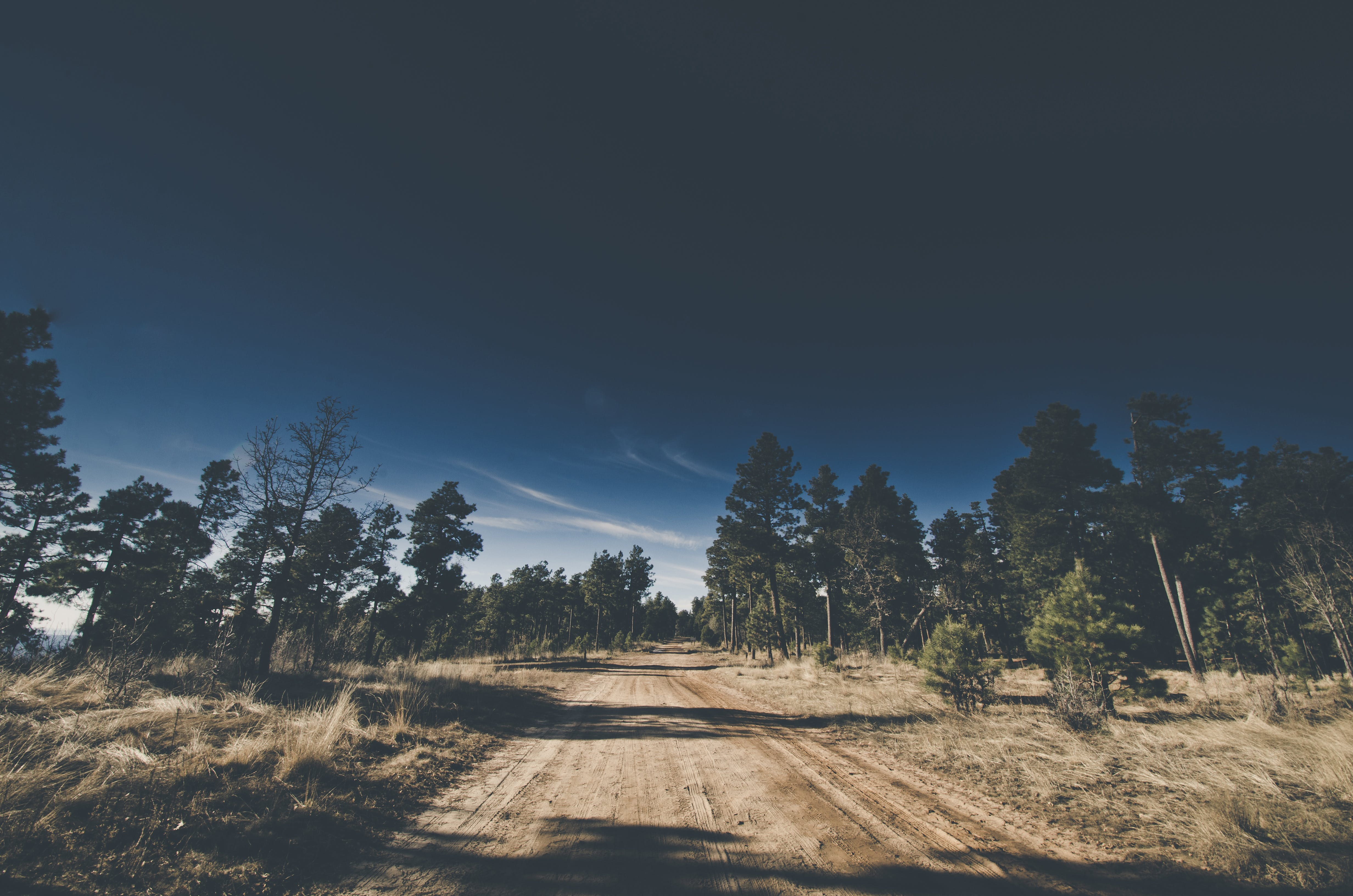 Dirt Road Surrounded by Tress
