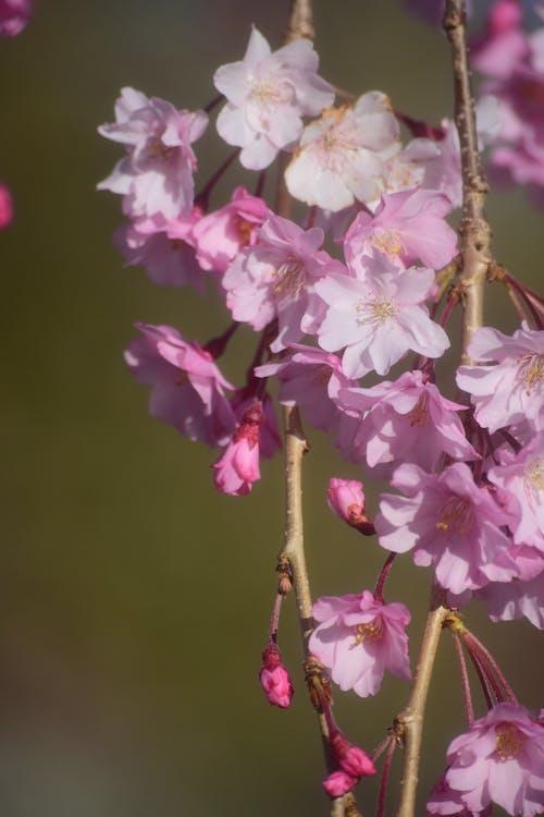 ağaç, çiçek, doğa içeren Ücretsiz stok fotoğraf