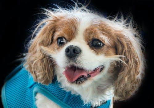 Základová fotografie zdarma na téma pes