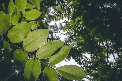 คลังภาพถ่ายฟรี ของ การเจริญเติบโต, กิ่งไม้, ความสด, ด้านล่าง