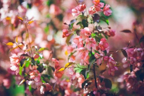 Foto d'estoc gratuïta de botànic, brillant, colors, creixement