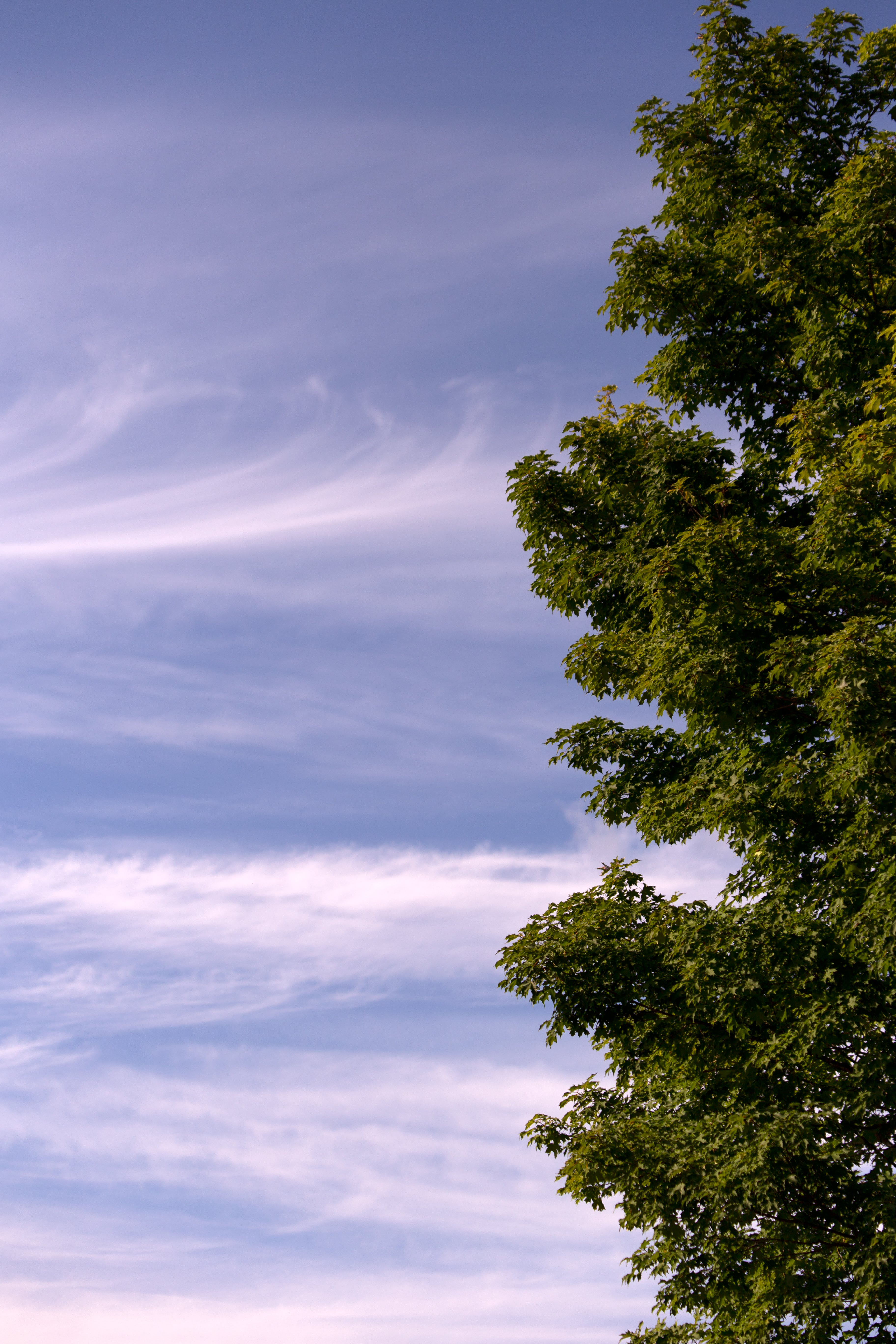 Green Leaf Tree Overlooking White Clouds and Blue Sky