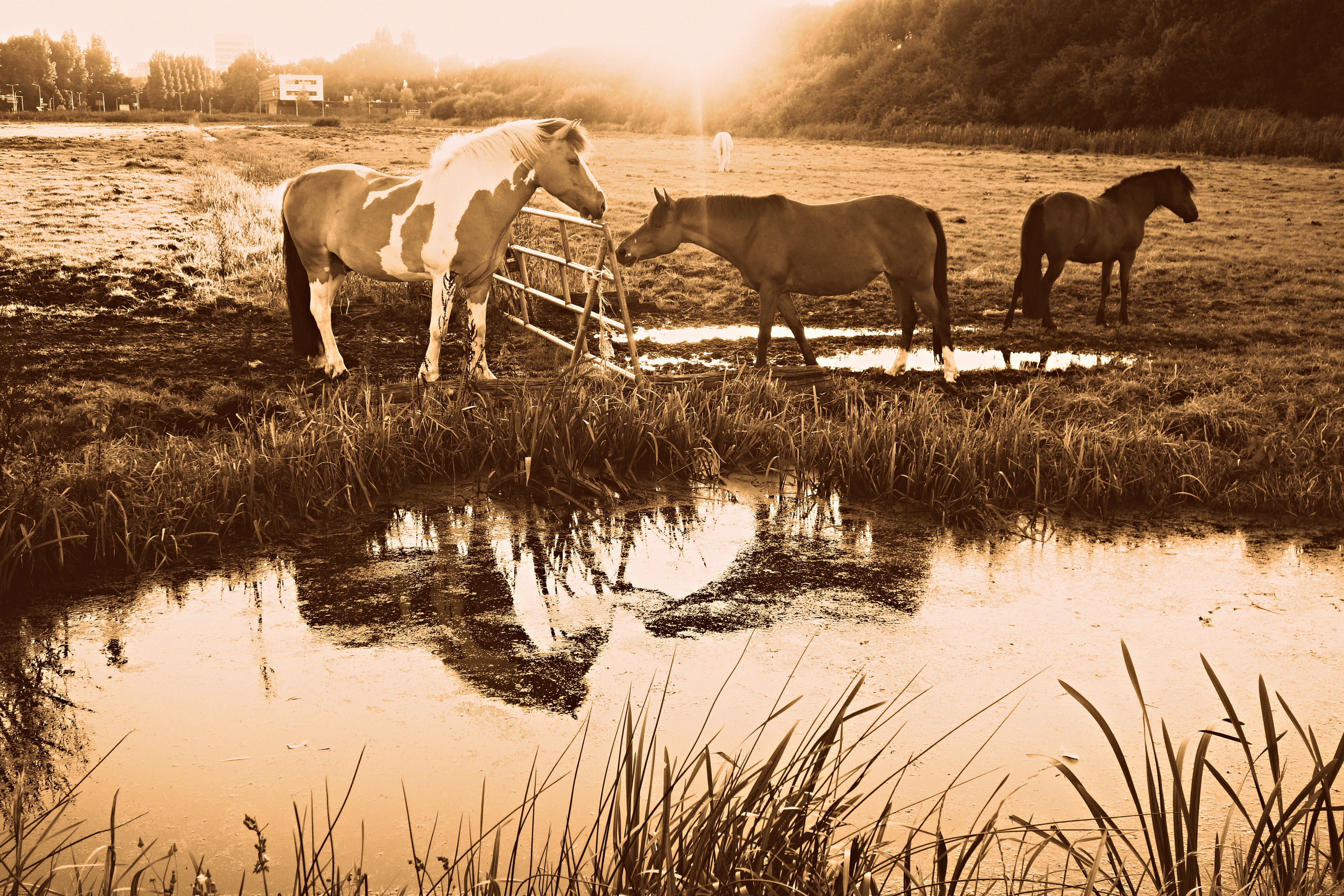 of animal, equine, fence, horse