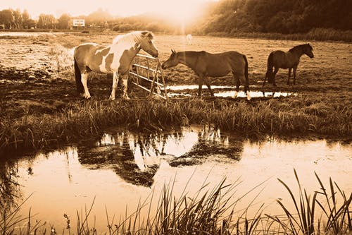 Free stock photo of animal, equine, fence, horse