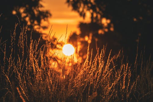 Free stock photo of #glow, #grass, #sun, #sunset