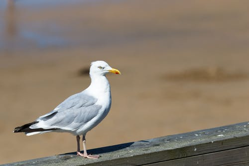 Free stock photo of #beach, #bird, #seagull