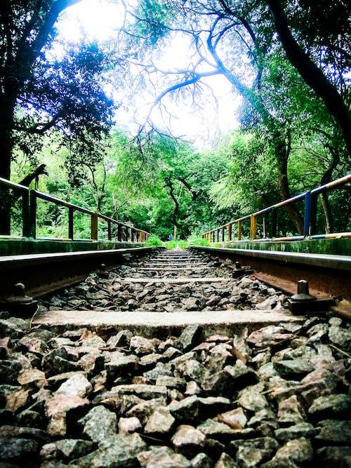 คลังภาพถ่ายฟรี ของ ทางรถไฟ, ธรรมชาติ, พืช, รางรถไฟ
