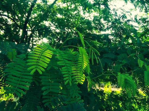 คลังภาพถ่ายฟรี ของ ปาร์ค, วอลล์เปเปอร์ HD, อุทยานธรรมชาติ, เขียวตลอดปี