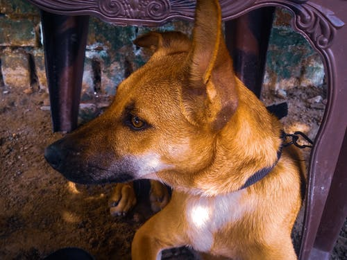 คลังภาพถ่ายฟรี ของ #หมา, สุนัข, เก้าอี้