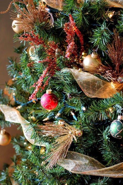 Δωρεάν στοκ φωτογραφιών με Χριστούγεννα, χριστουγεννιάτικο δέντρο