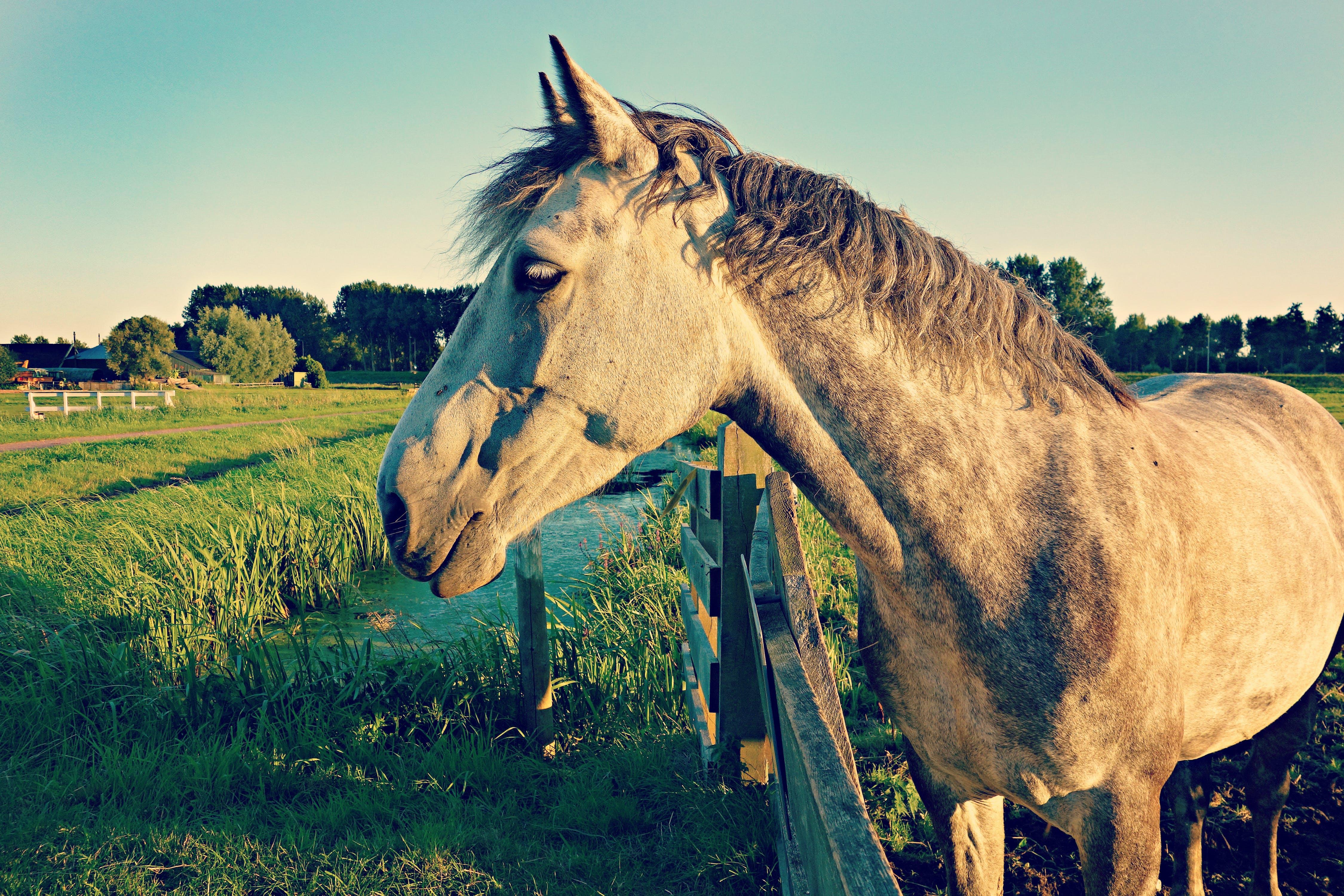 animal, equine, farm