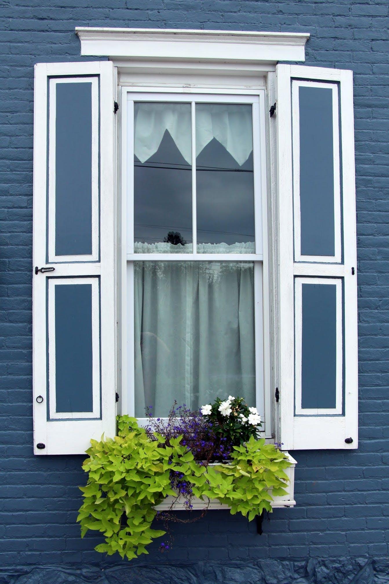 Základová fotografie zdarma na téma okenice