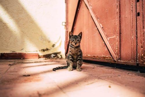 Gray Tabby Cat Near Brown Gate