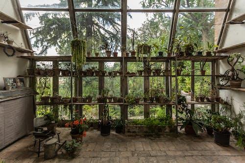 園林植物, 植物, 植物園, 植物的 的 免費圖庫相片