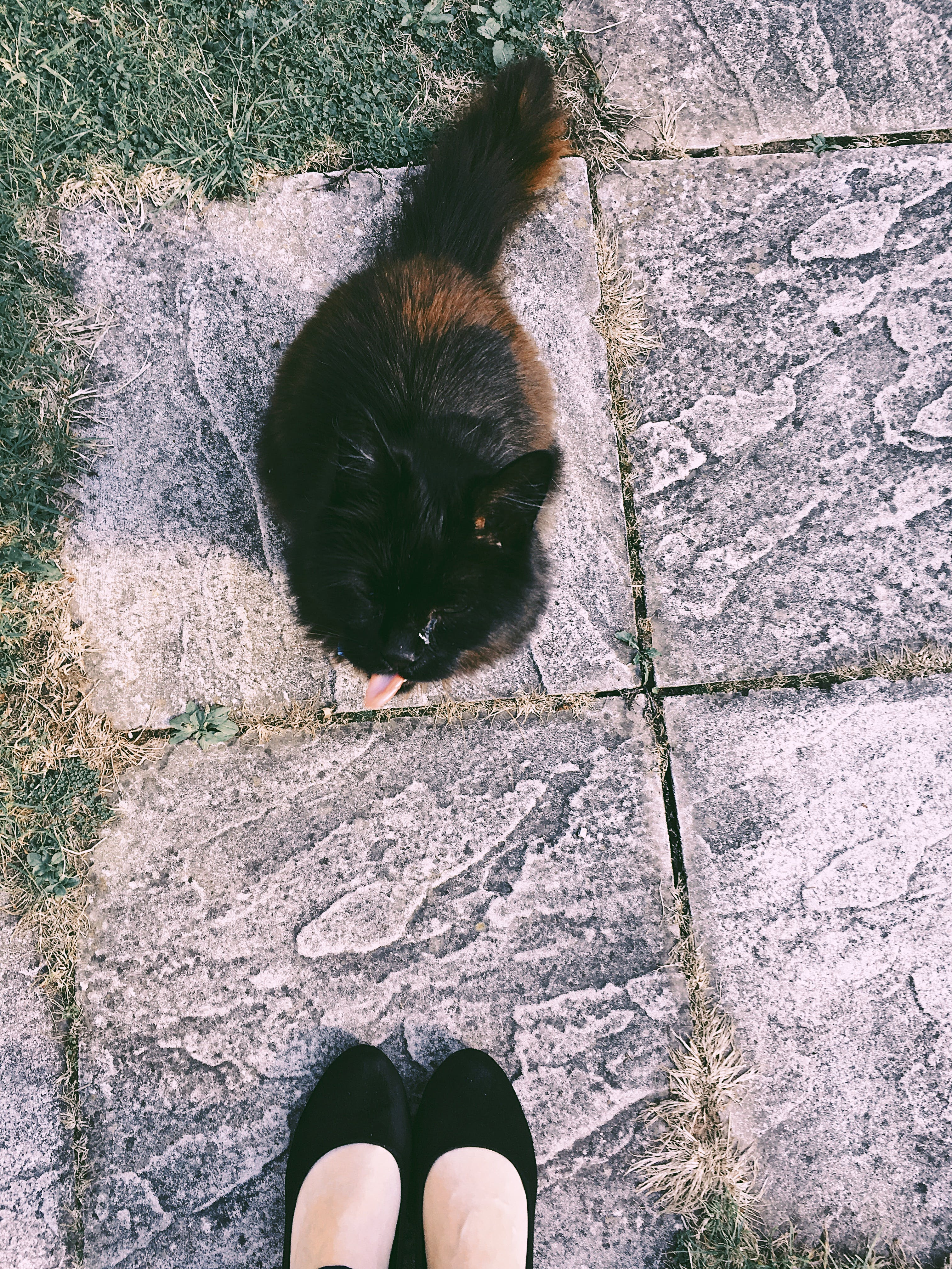 Black and Brown Cat Sitting on Ground Near Woman