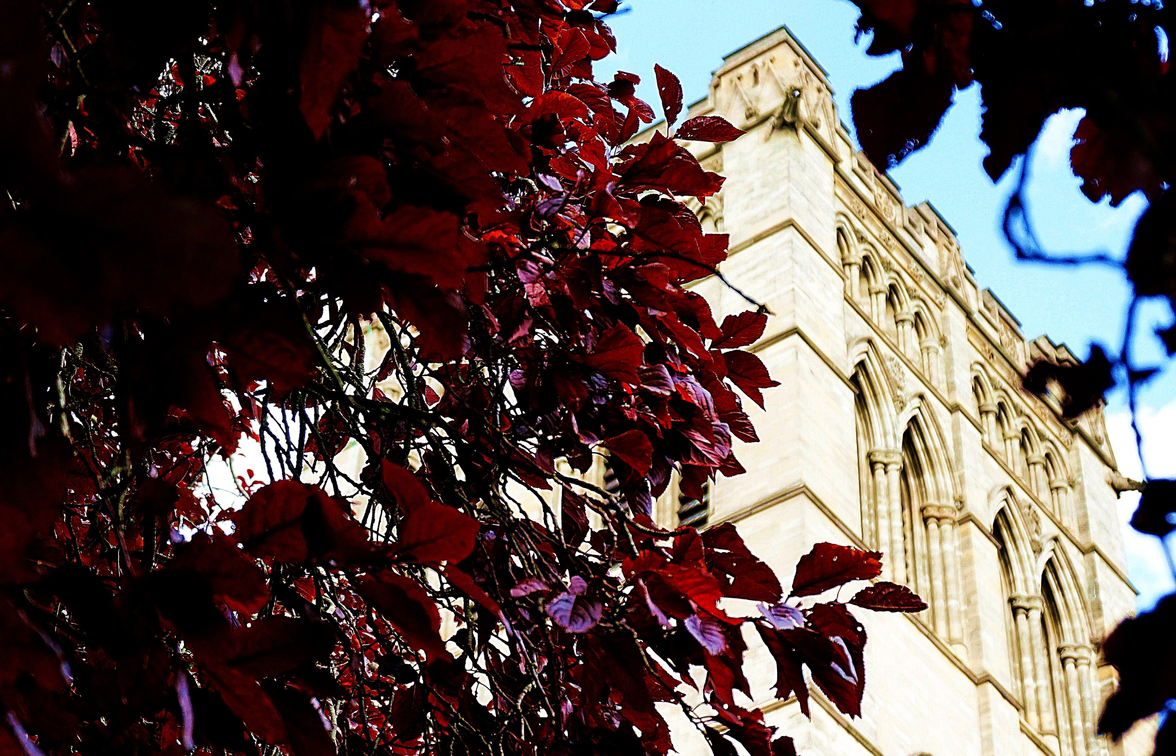 Free stock photo of building, cathedral, church, trees