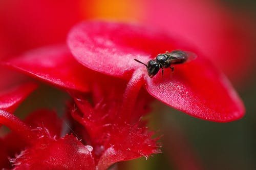 Selective Focus Photography of Black Fly on Red Flower