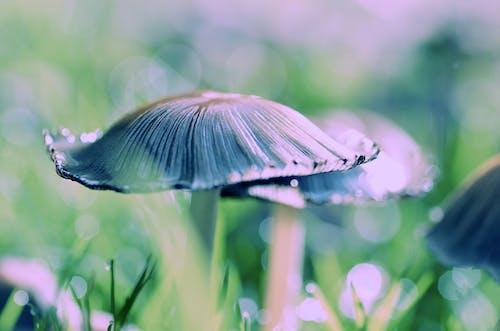 Close-up Photography of Fungi Mushroom