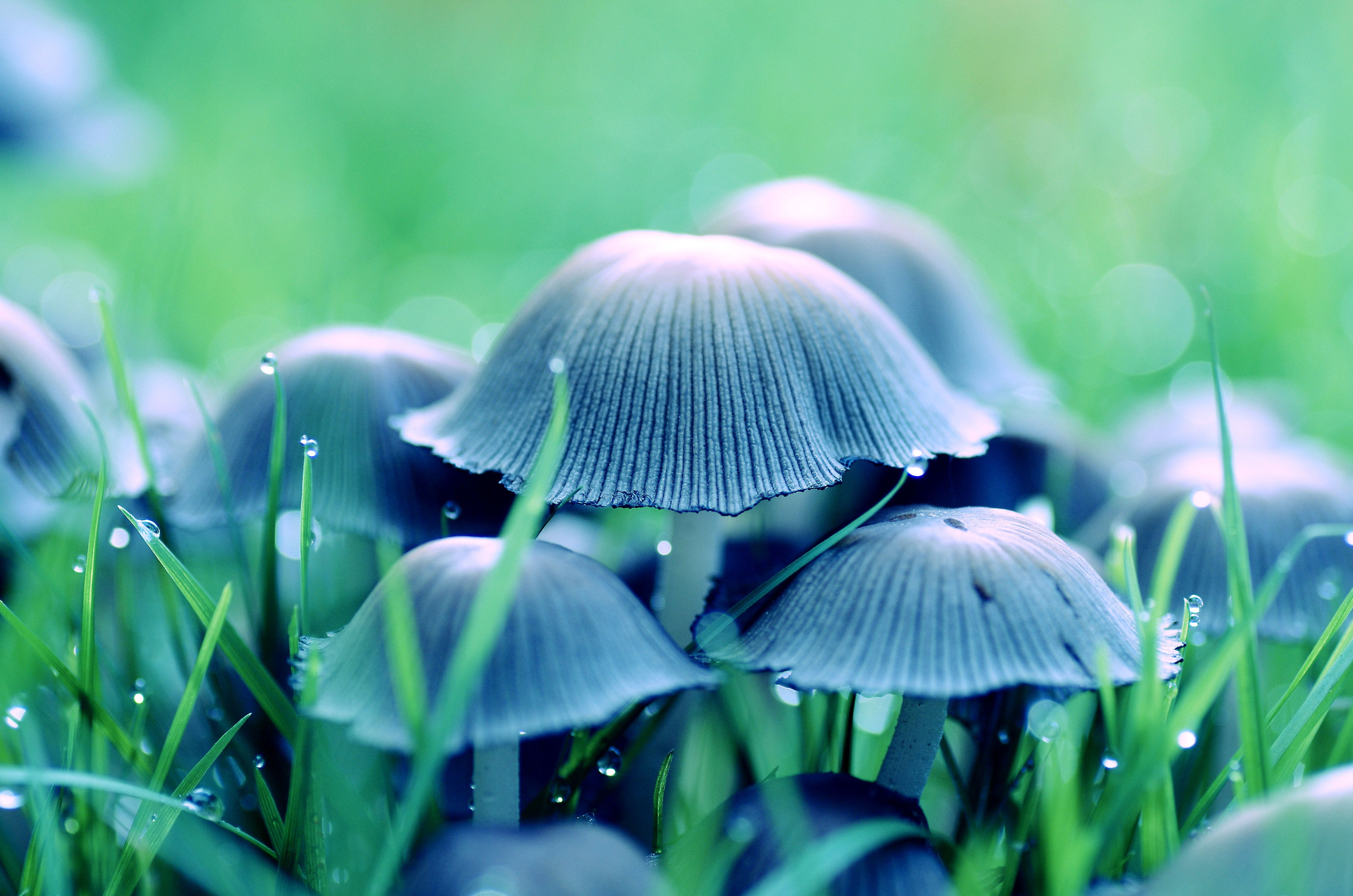 Mushroom in Middle of Grass
