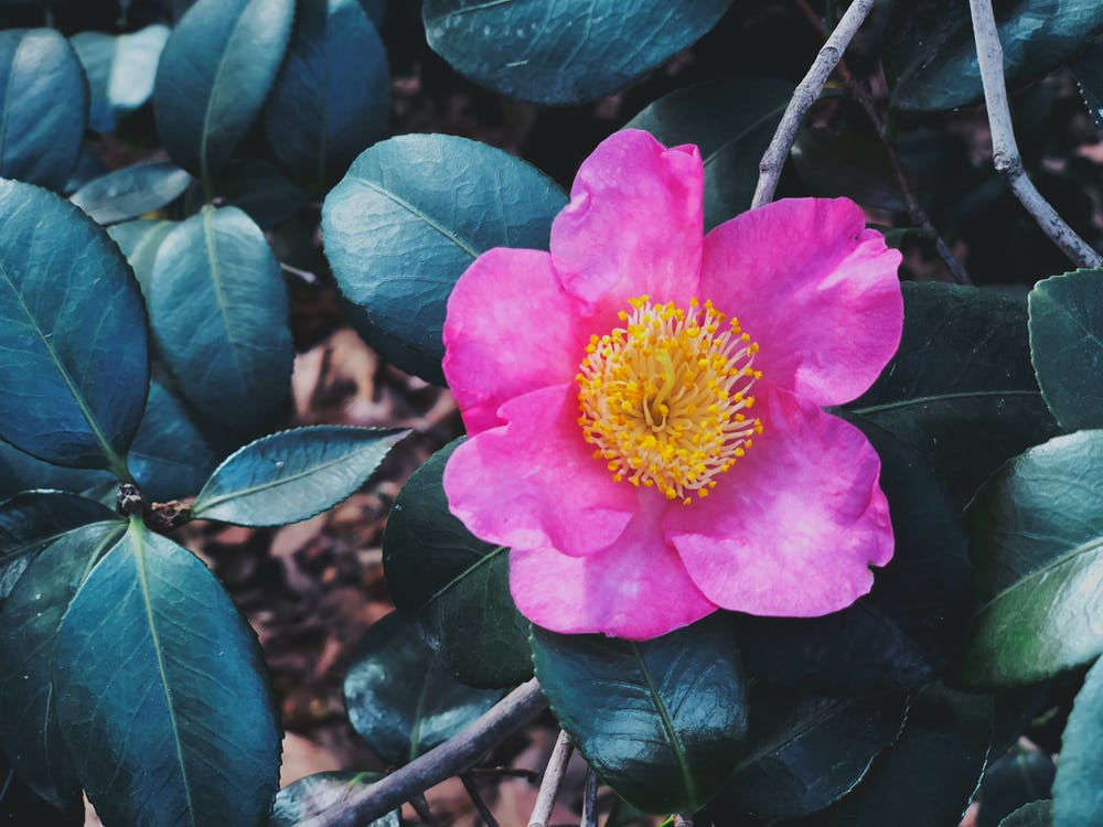 delikatny, flora, jasny