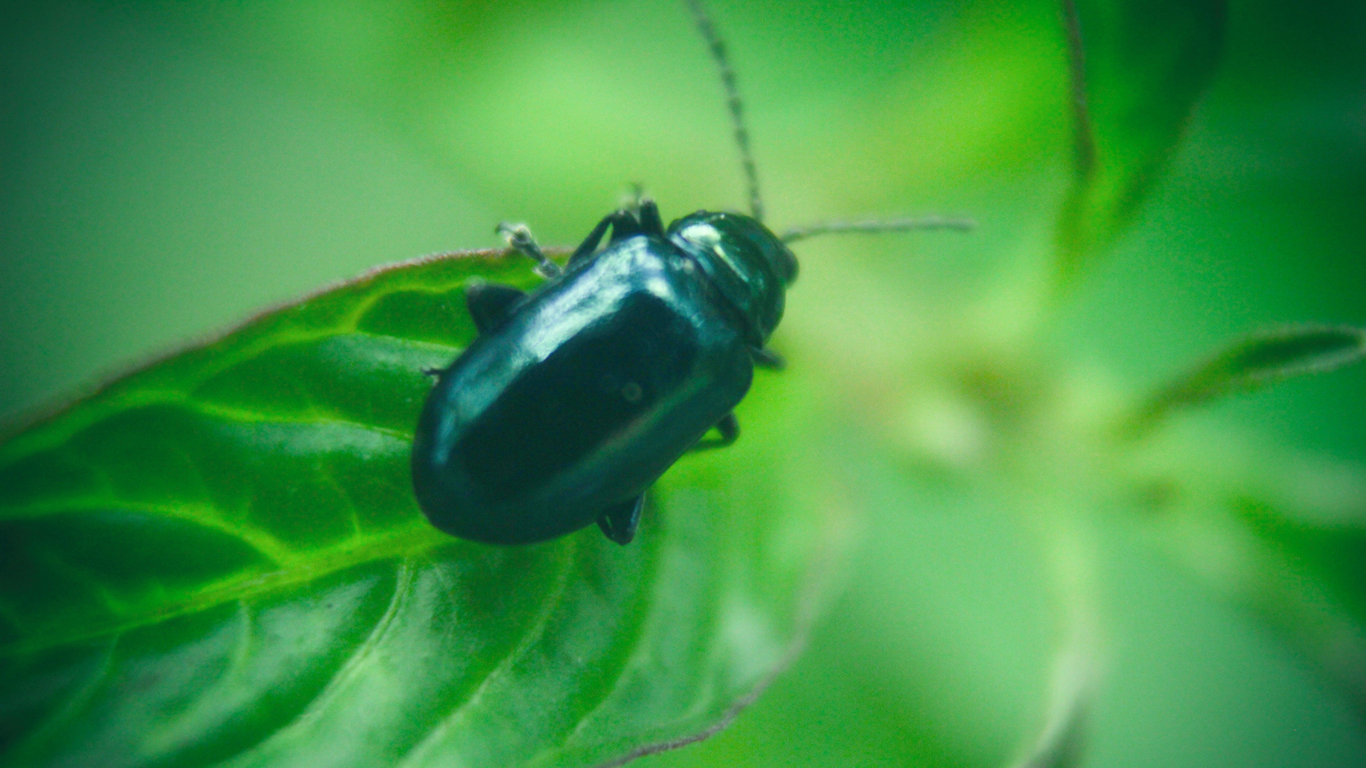 Základová fotografie zdarma na téma brouk, entomologie, prostředí, zvíře