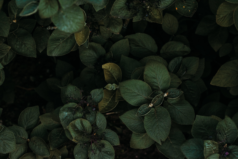 Kostenloses Stock Foto zu garten, blätter, pflanzen, grün