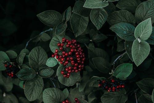 Gratis lagerfoto af 4k-baggrund, bær, close-up, farve