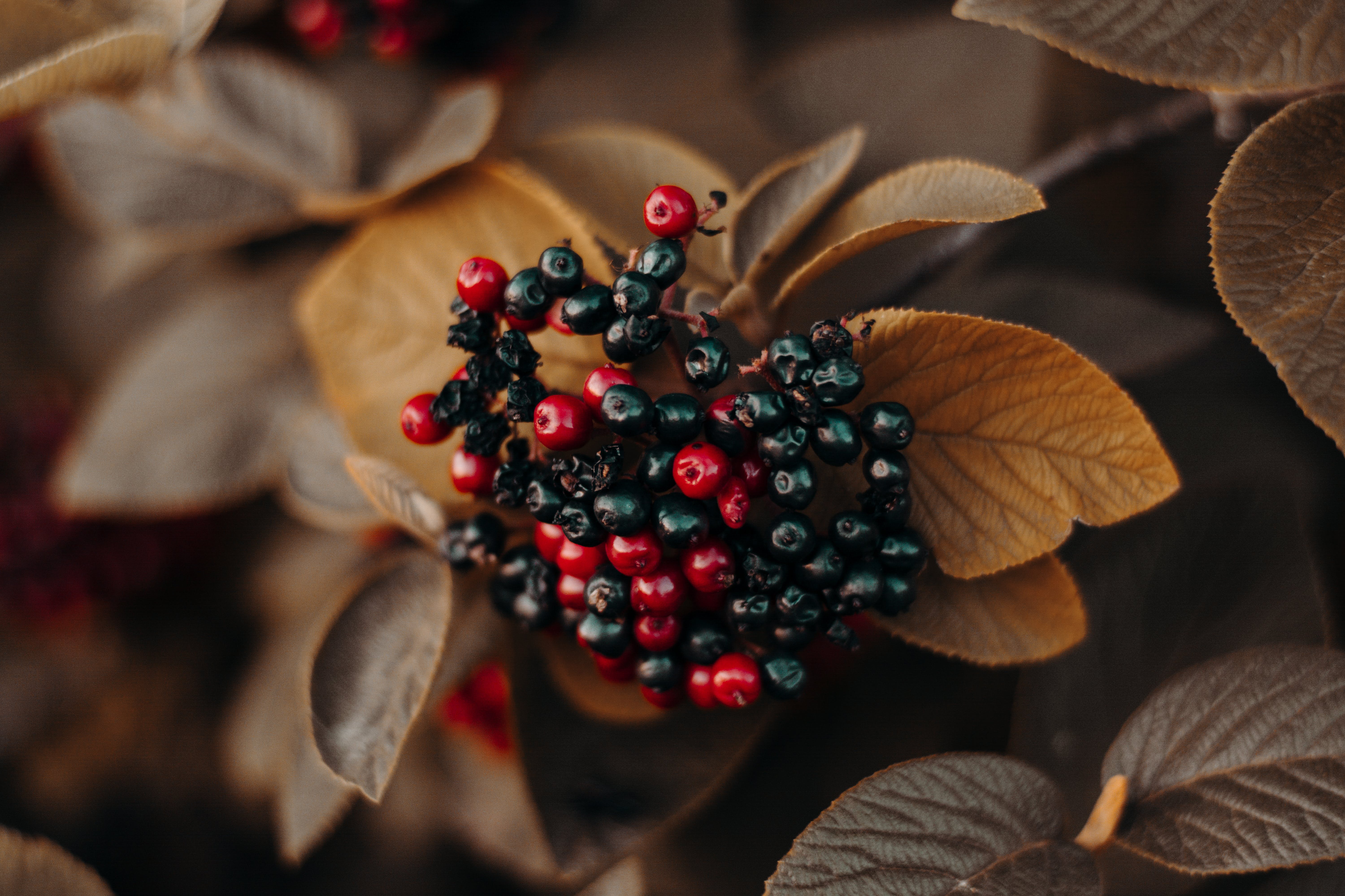 Shallow Focus Photography of Red and Black Berries