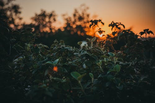 HD 바탕화면, 경치, 나무, 녹색의 무료 스톡 사진