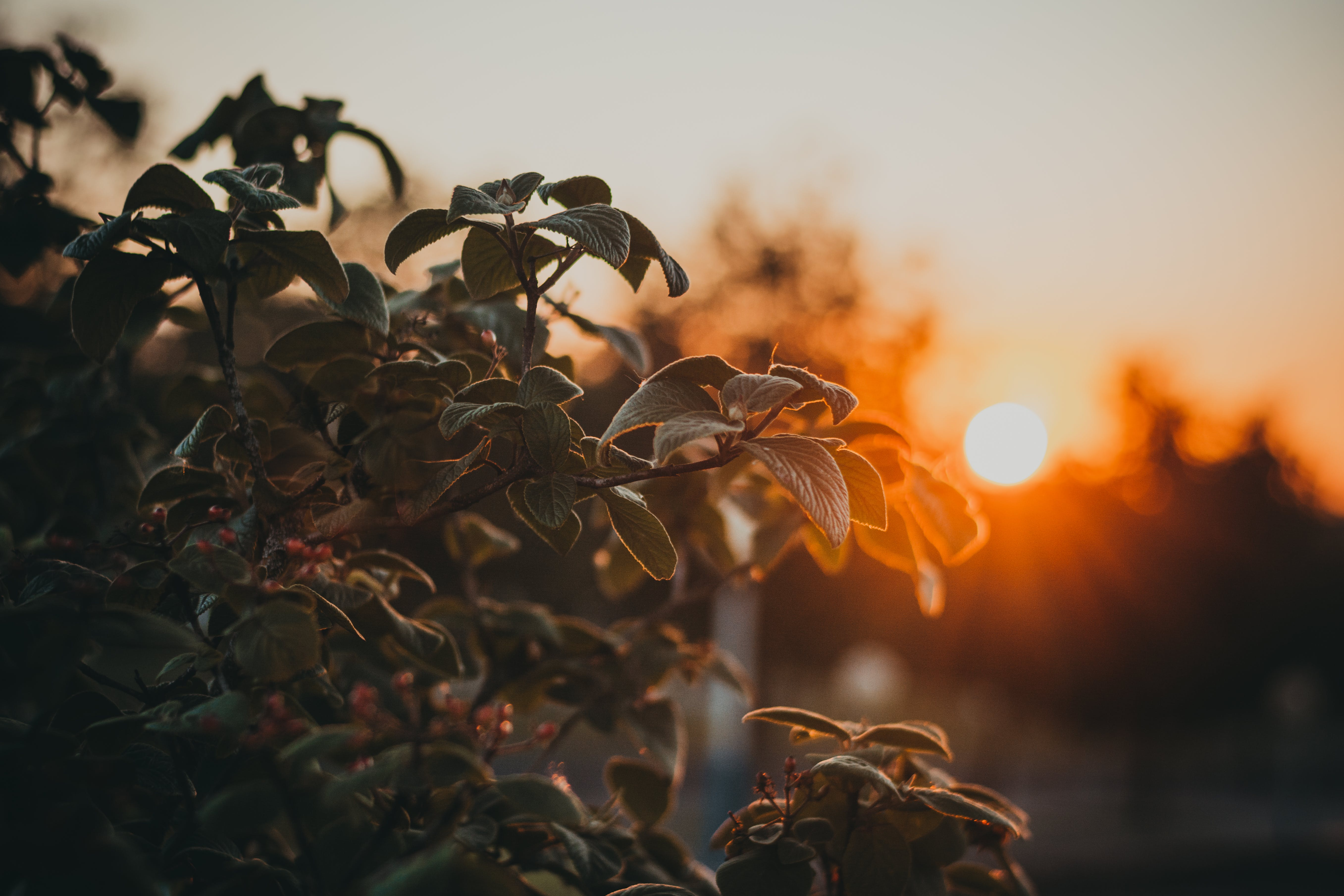 Close-up Photography of Green Leafed Plant at Golden Hour