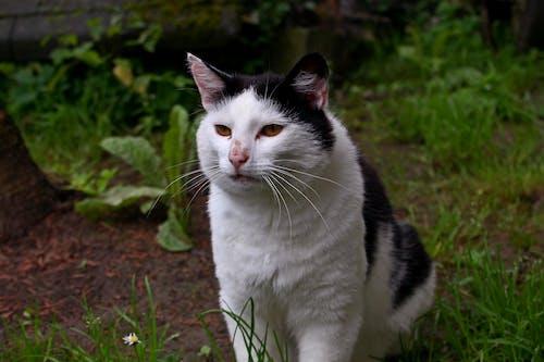 Бесплатное стоковое фото с canon, котенок, кошка, милый