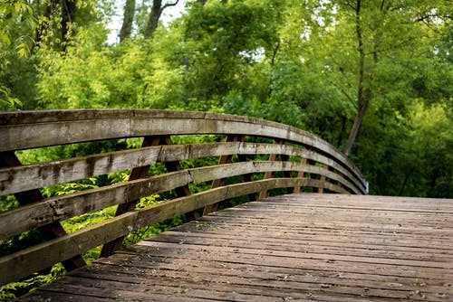Free stock photo of bridge, crossing, forest