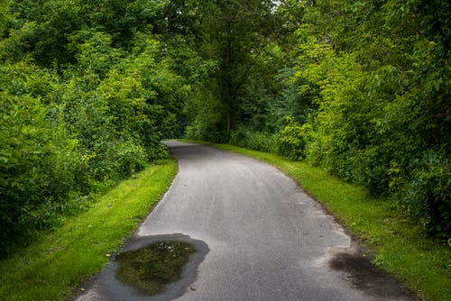 Free stock photo of 4k wallpaper, asphalt, forest