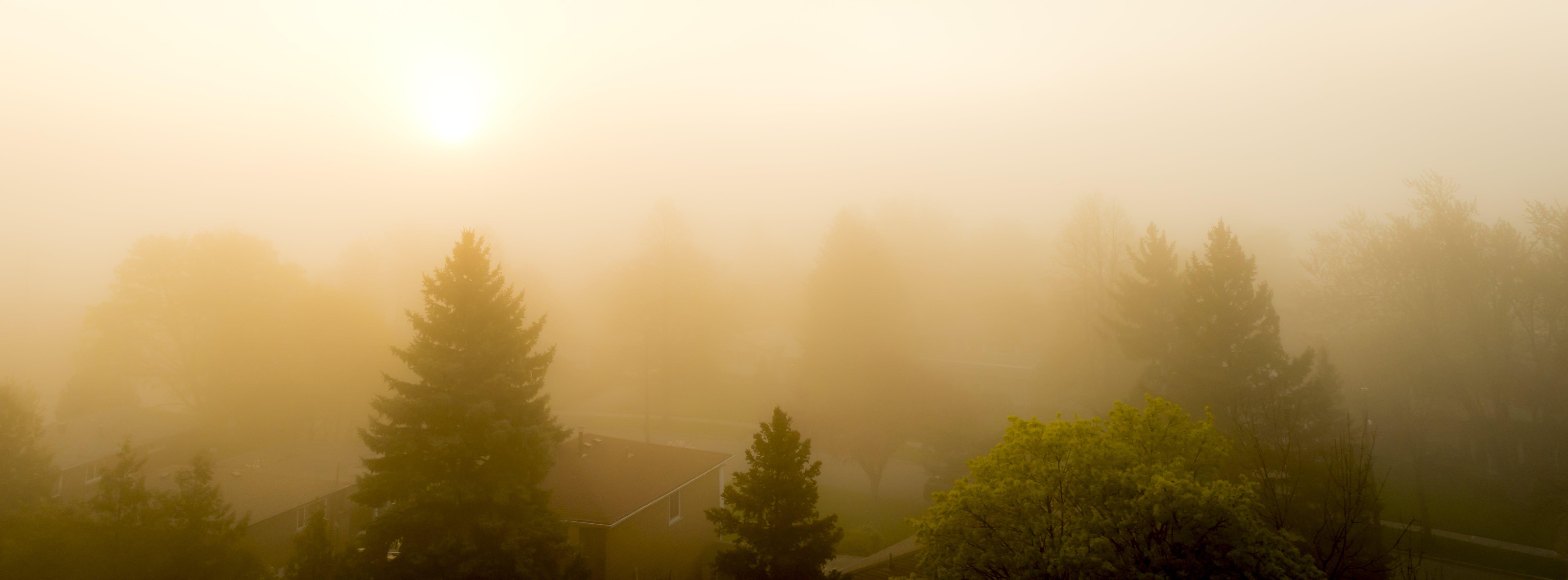 Kostenloses Stock Foto zu bäume, gelb, nebel, orange