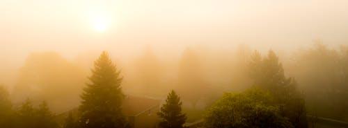 Foto profissional grátis de amarelo, árvores, ascensão do sol, conjunto de sol
