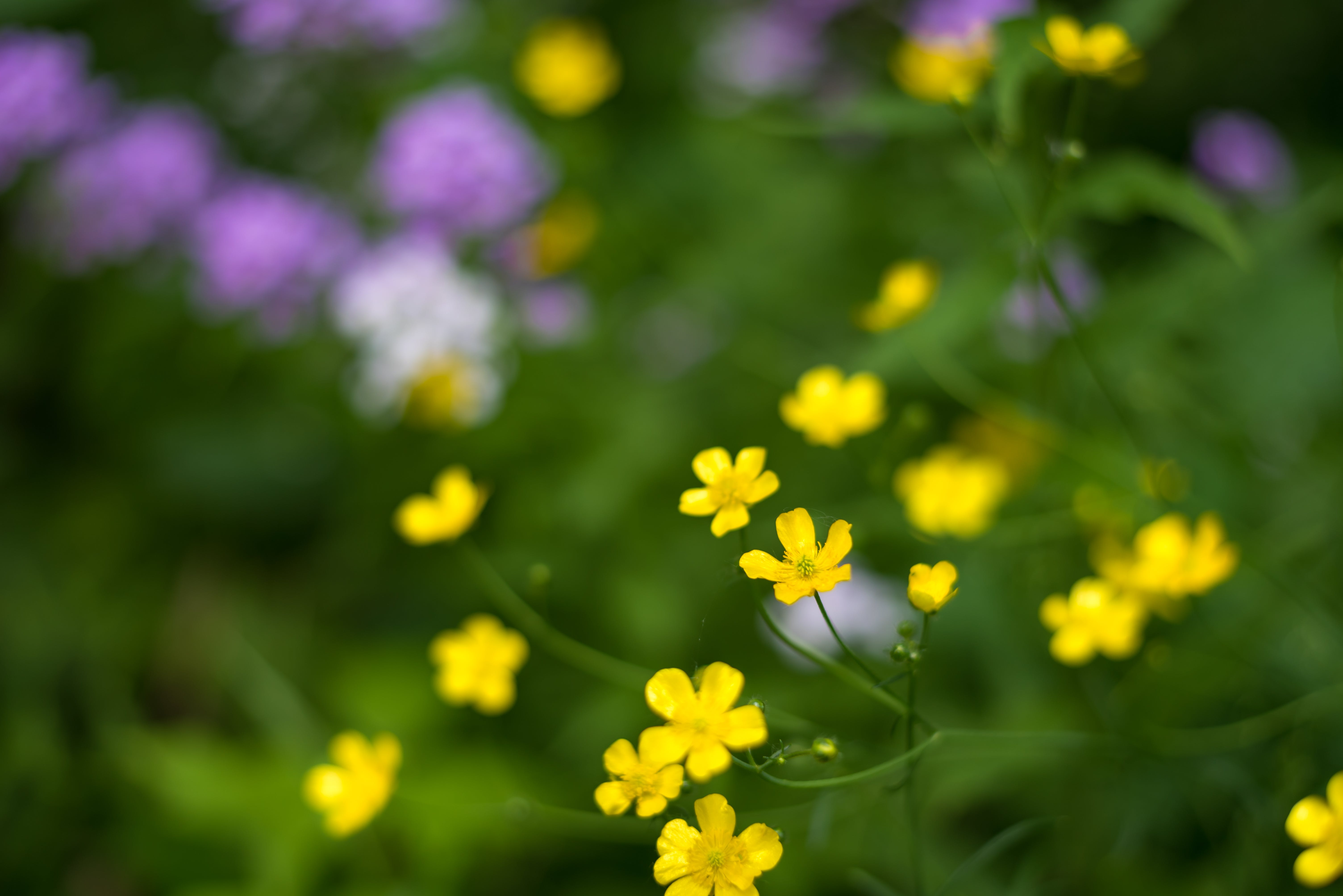 Free stock photo of 4k wallpaper, blurry background, closeup, flowers