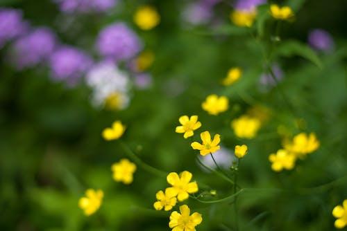 Foto profissional grátis de amarelo, ecológico, flores, fundo desfocado