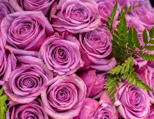 Foto profissional grátis de arranjo de flores, buquê de flores, flores, lilás