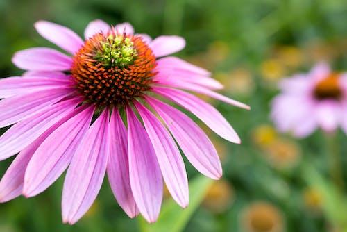Foto profissional grátis de close, flor, flor única, fundo desfocado