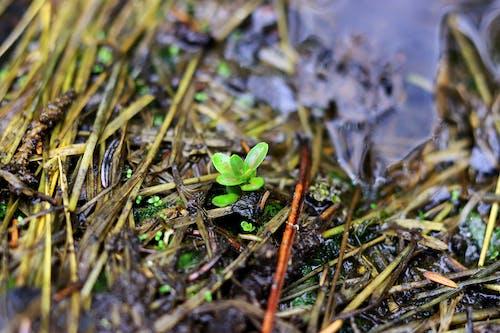 dirst, 地面, 天性, 嬰兒植物 的 免費圖庫相片