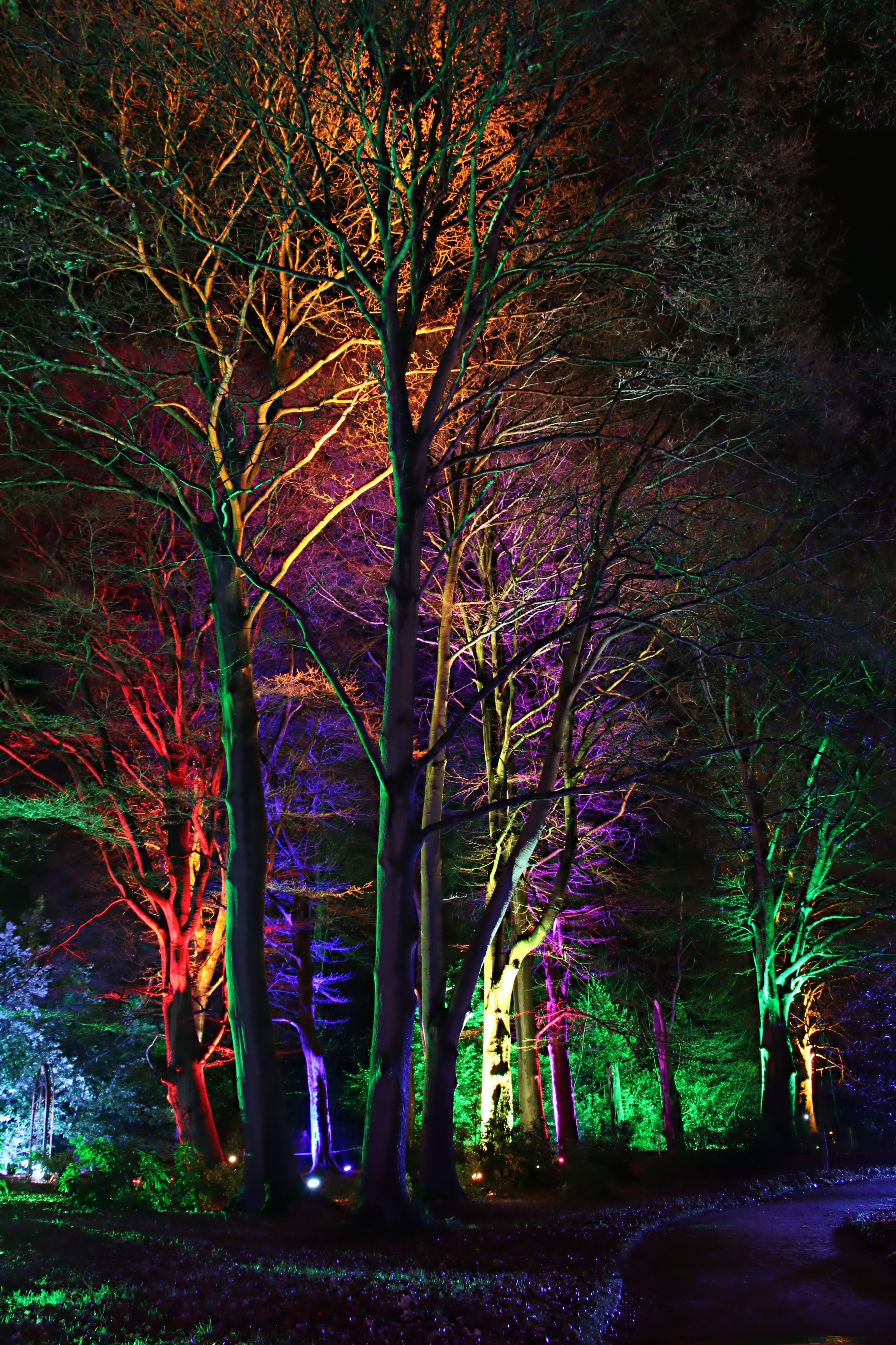 Lights Focused on Trees during Night
