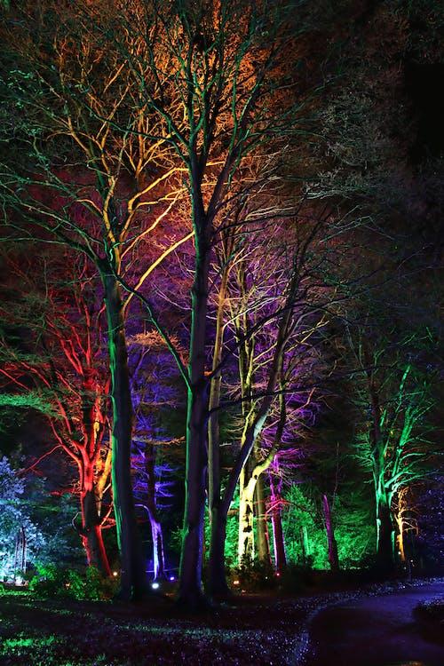 Foto d'estoc gratuïta de alba, arbres, boira, boscos