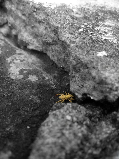 Free stock photo of awesome, insect, little