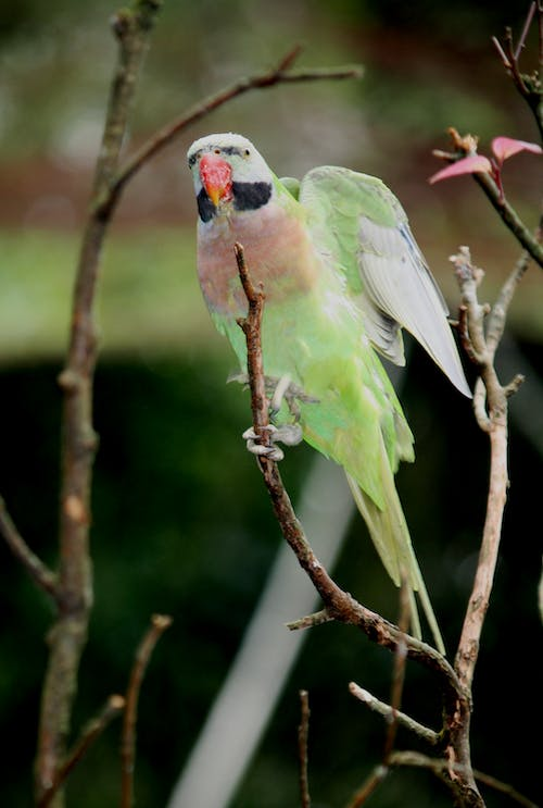 Pink and Green Bird on Tree Branch
