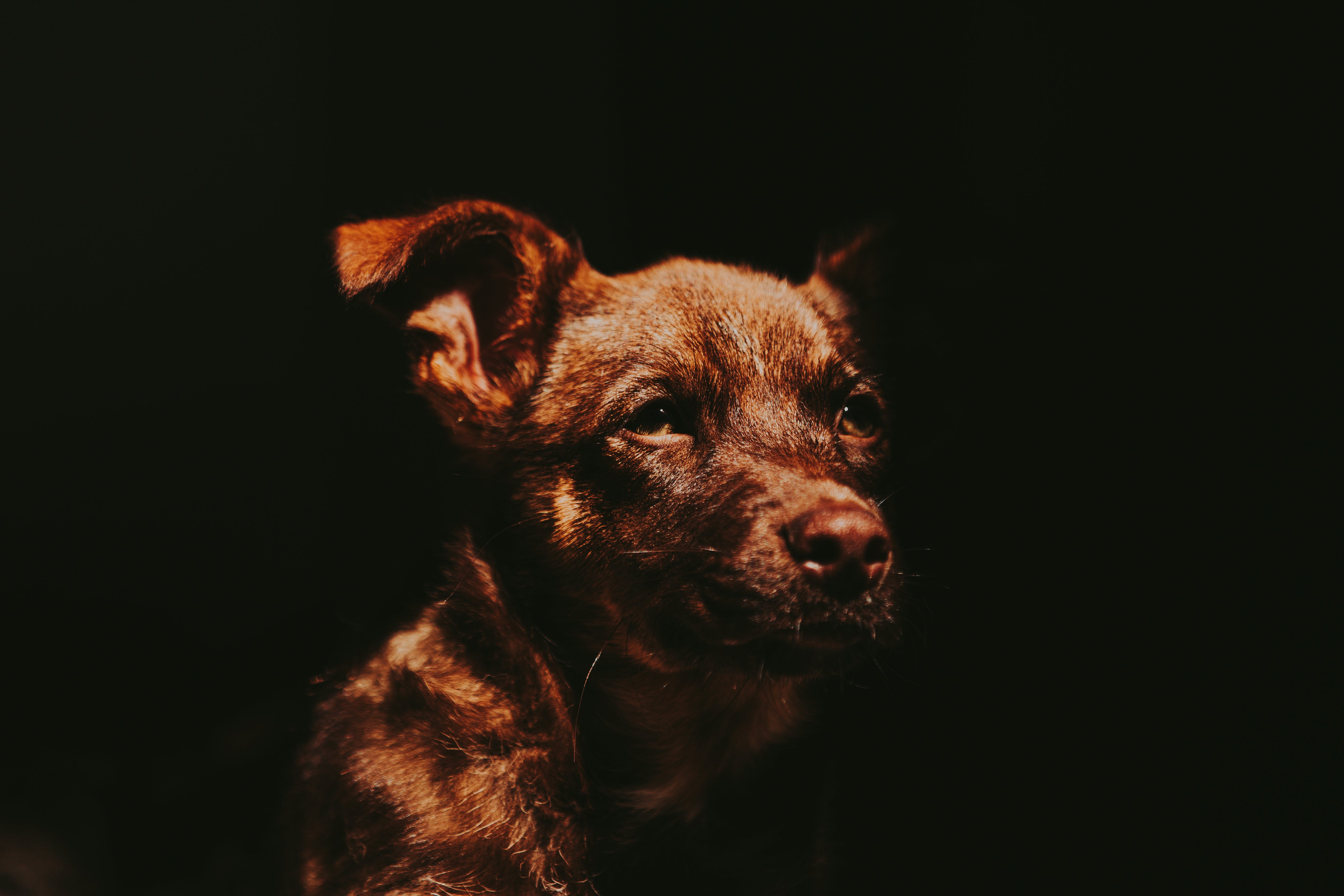 Free stock photo of light, animal, dog, dogs