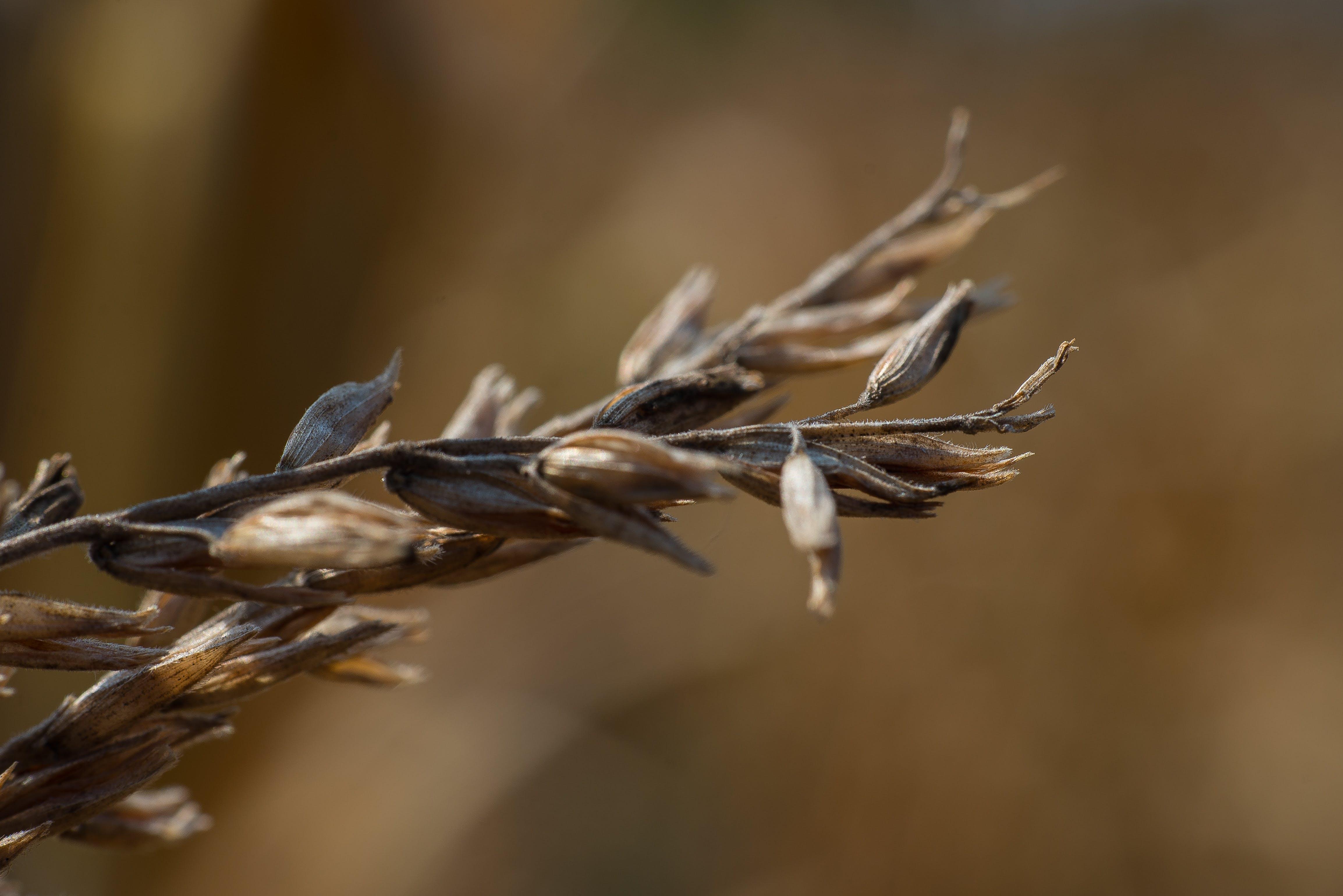 Free stock photo of dry flower