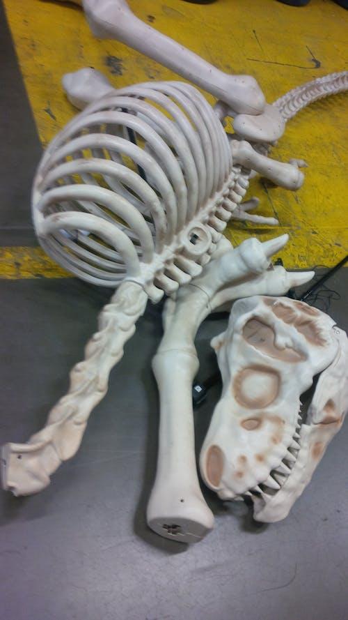 Free stock photo of halloween, props, skeleton
