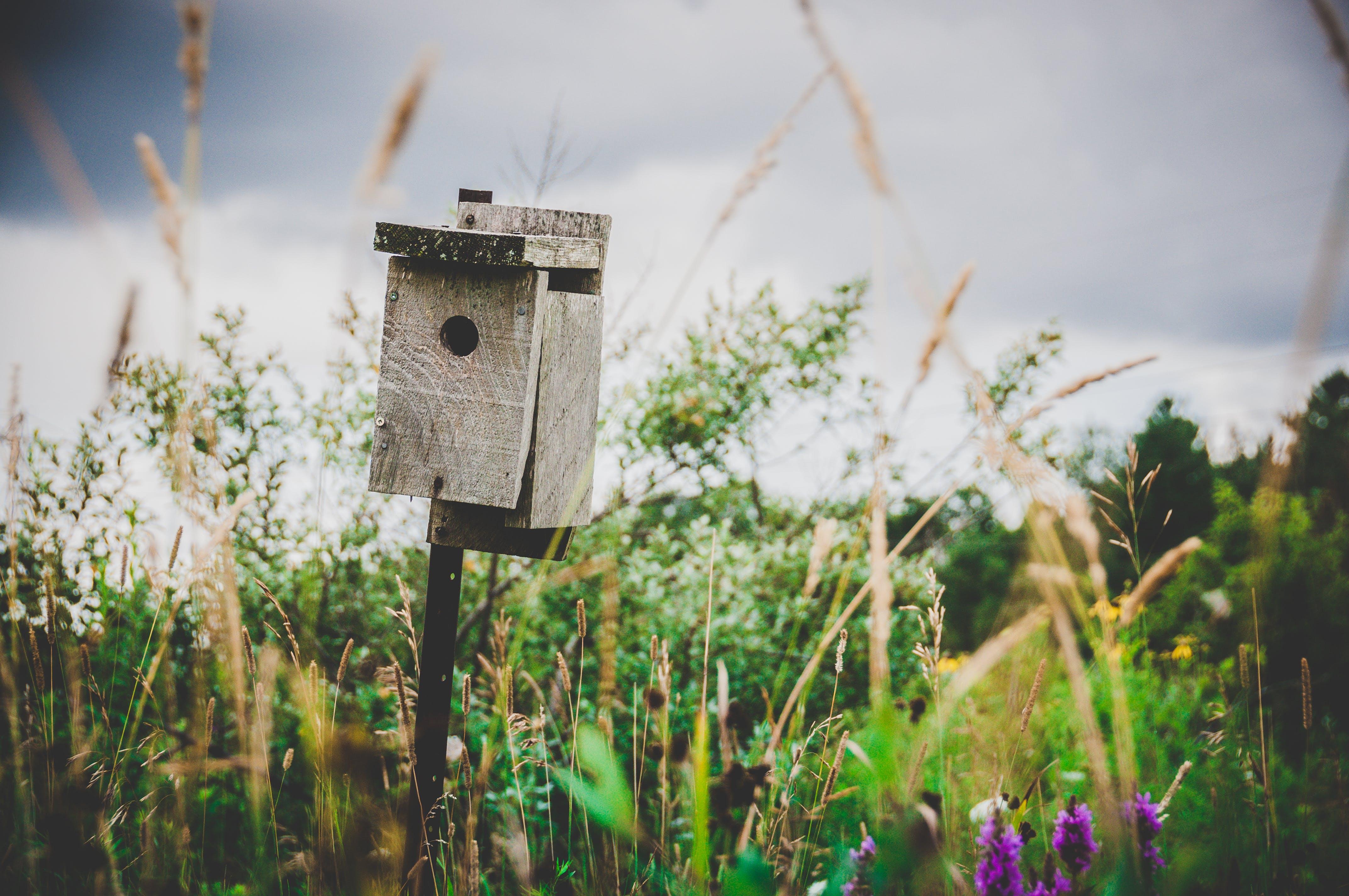 Selective Focus Photography of Gray Wooden Pedestal Birdhouse