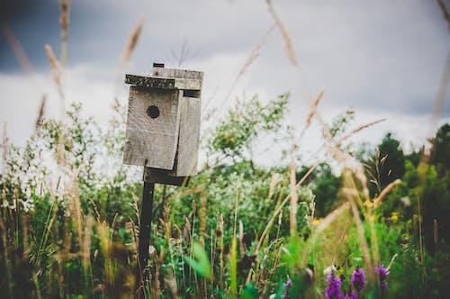 Immagine gratuita di ambiente, campo, casetta per uccelli, colore